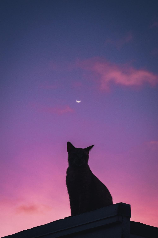 silhouette of cat under purple sky