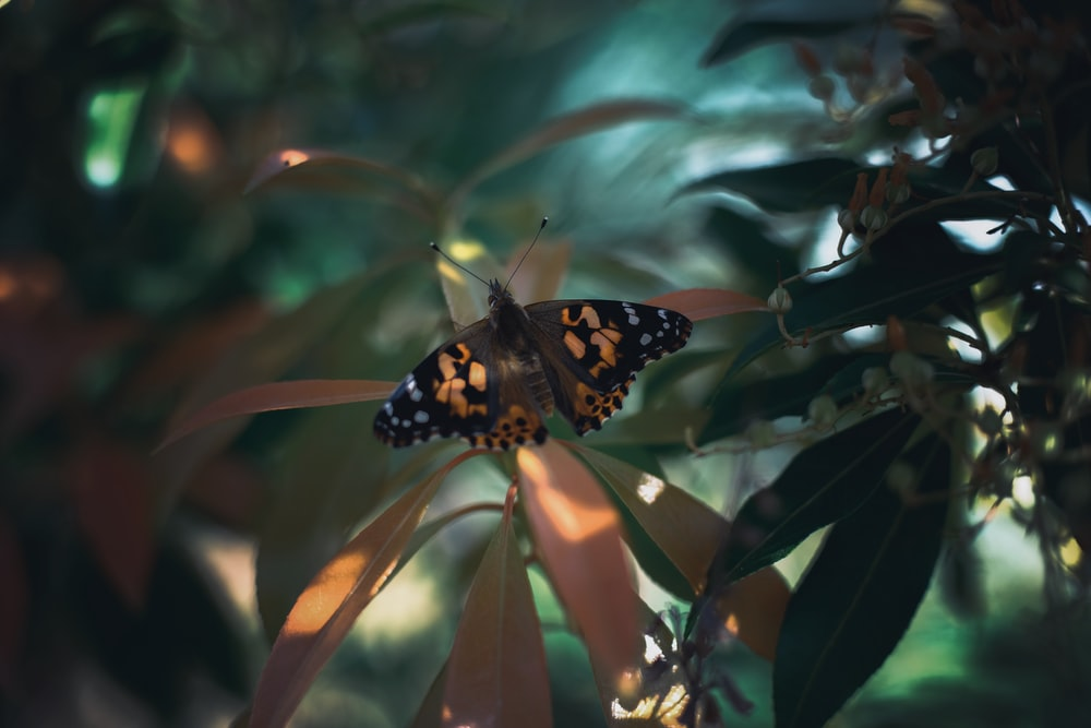 black and brown butterfly on green plant