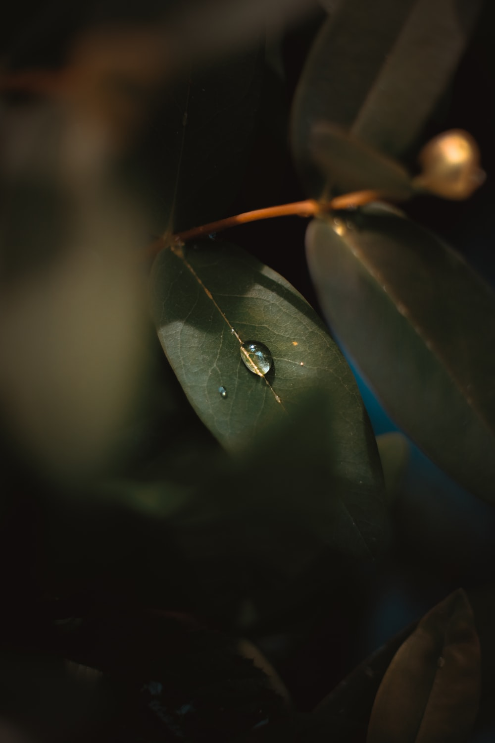 water droplet on green plant