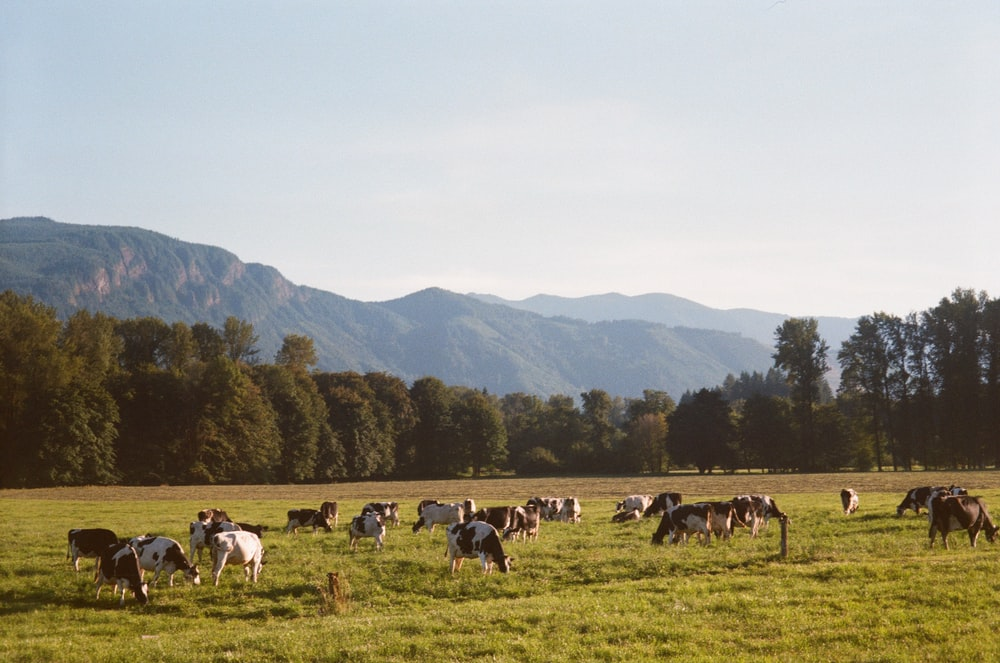 herd of white and black horses on green grass field during daytime