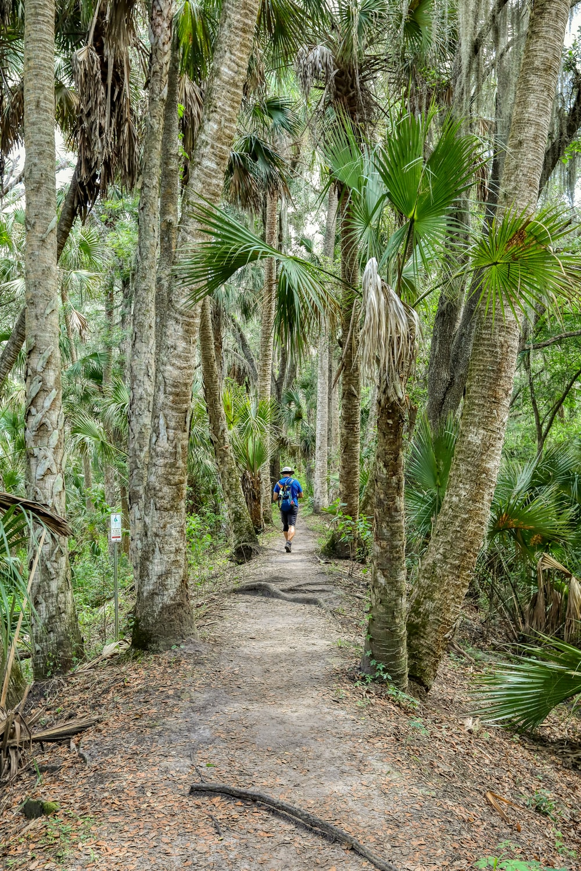 man in blue shirt walking on pathway between palm trees during daytime
