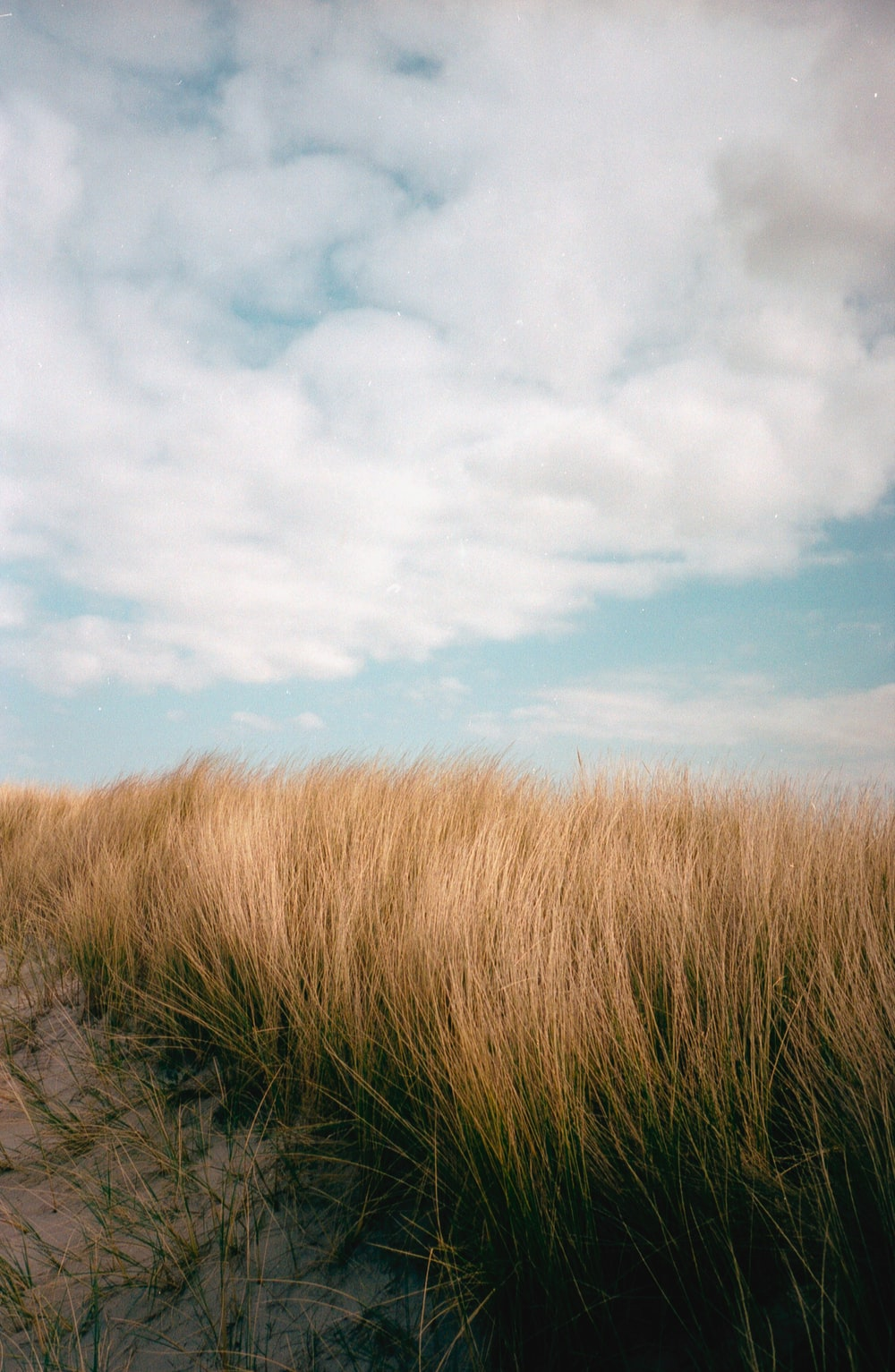 brown grass field under white clouds and blue sky during daytime