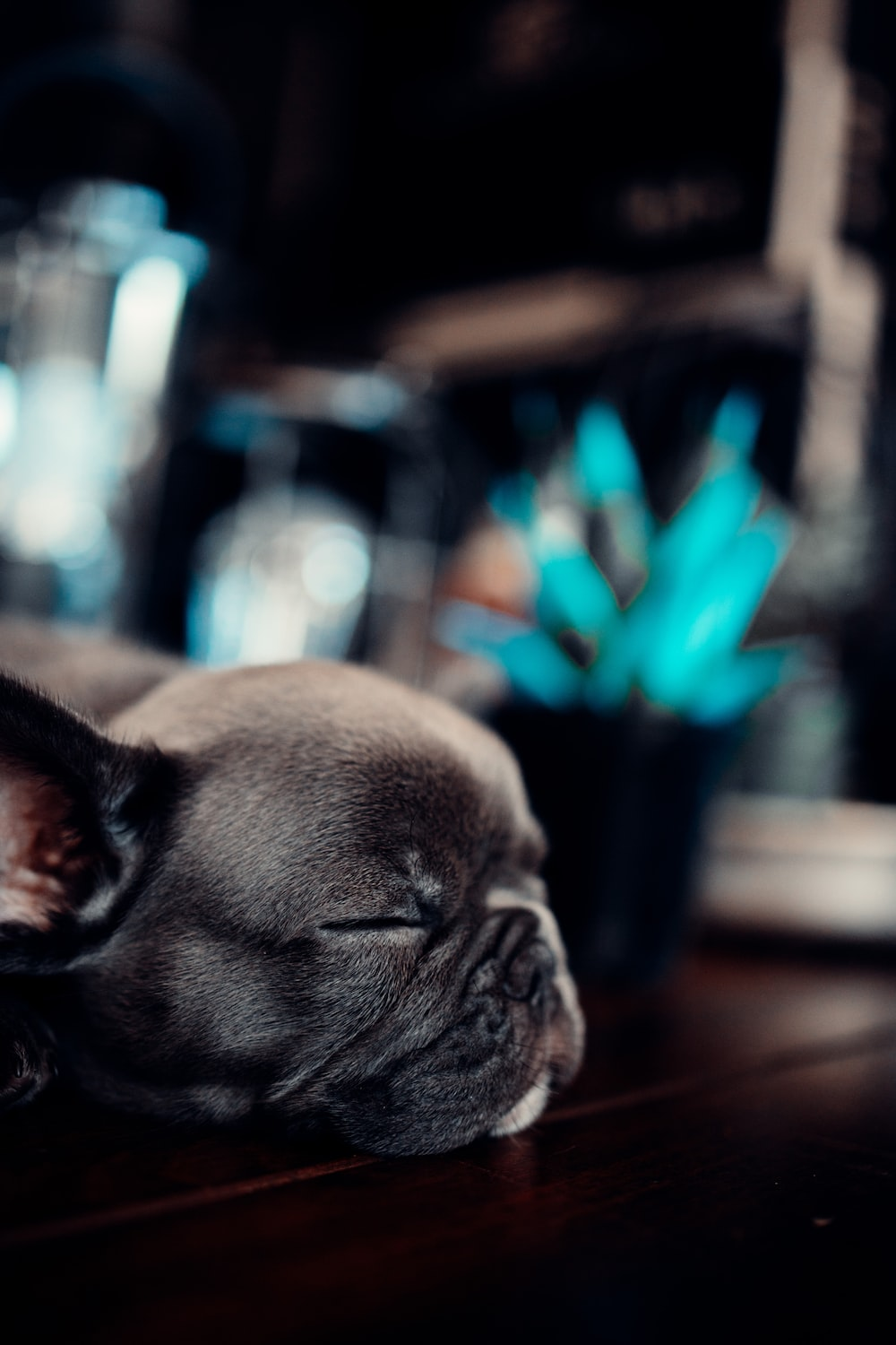 black french bulldog puppy on selective focus photography