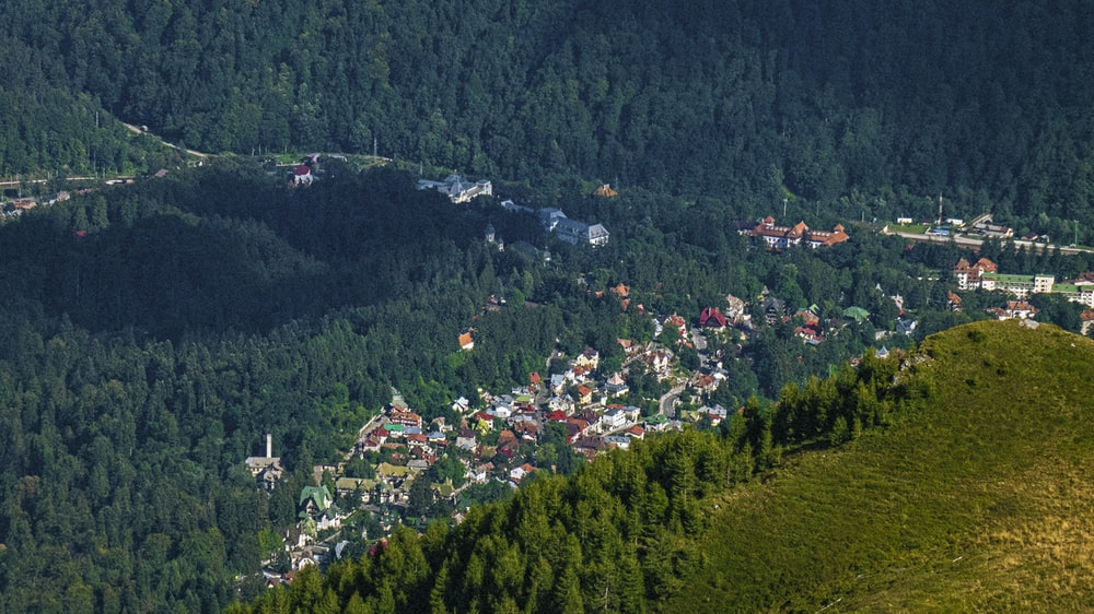 aerial view of green forest during daytime