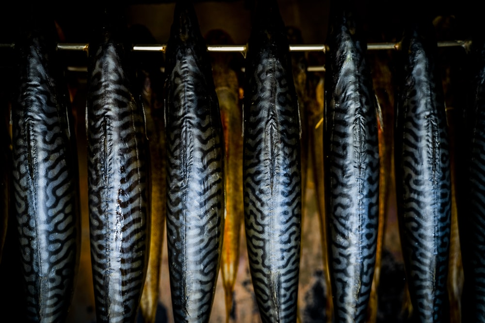black and gray fish on black metal frame