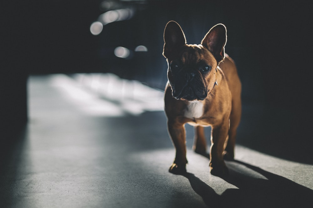 brown and white short coated dog on gray concrete road during daytime