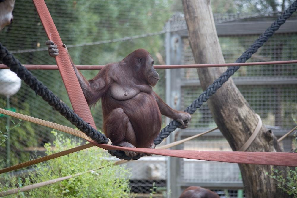 brown monkey on brown rope during daytime