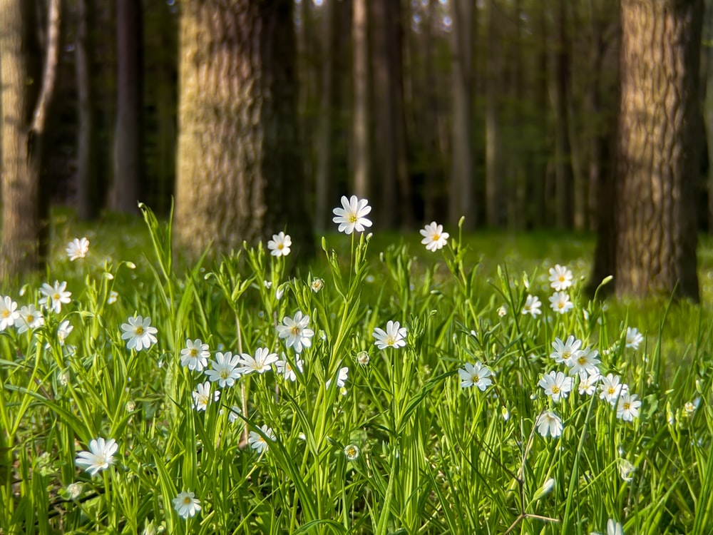 white flowers in forest during daytime