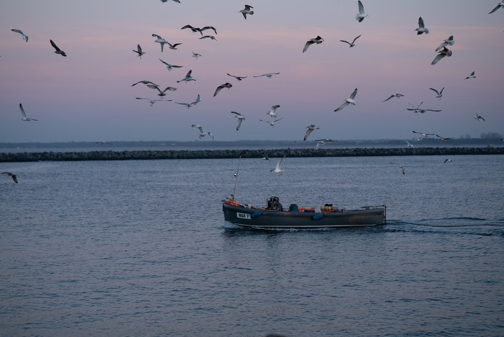 people riding on boat on sea during daytime