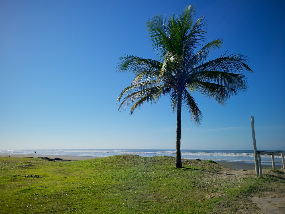 green palm tree on green grass field near sea during daytime