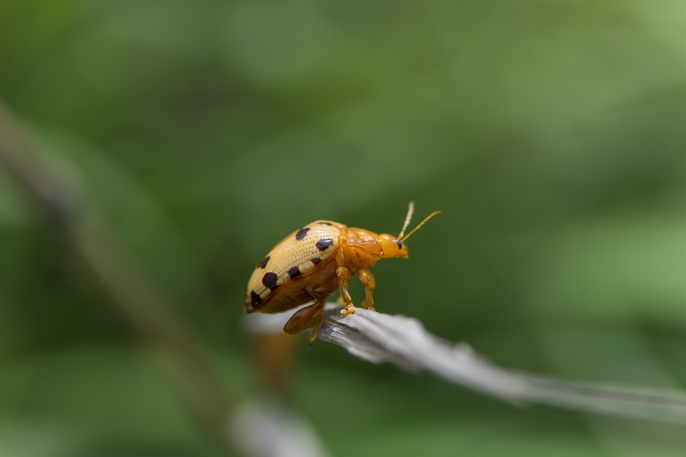 yellow and black ladybug on green leaf in close up photography during daytime