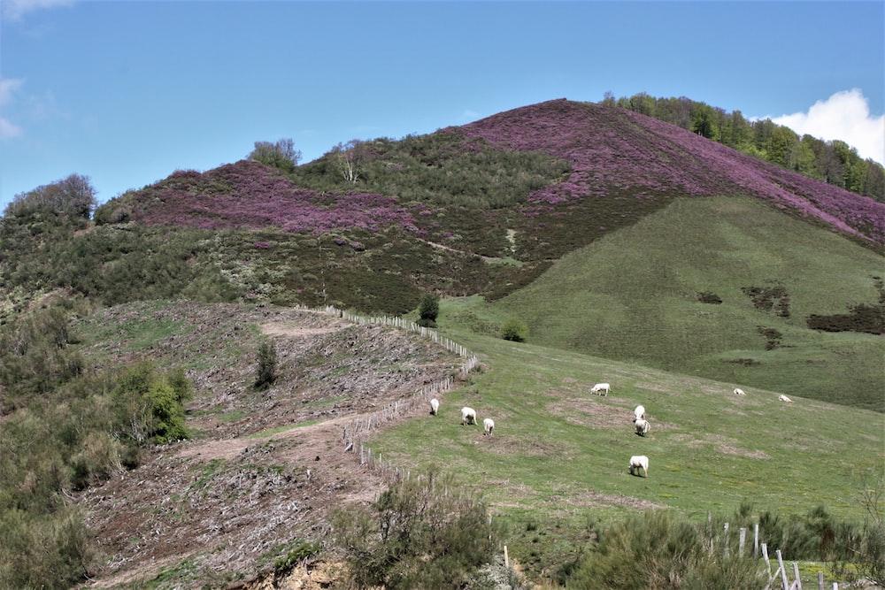 green grass field near mountain under blue sky during daytime