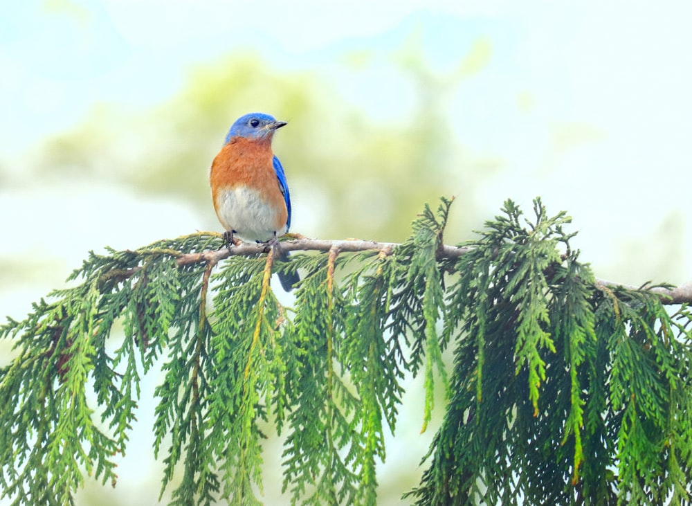 blue and brown bird on green tree branch during daytime