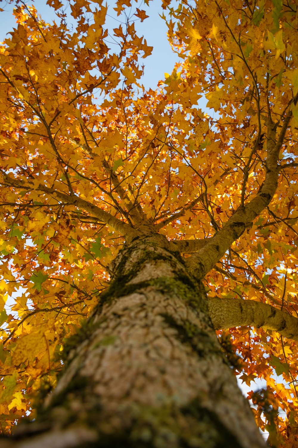 brown and yellow leaves on tree
