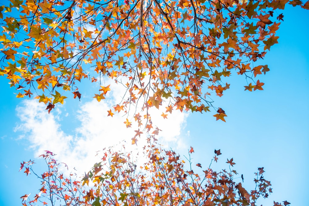 brown leaves under blue sky during daytime