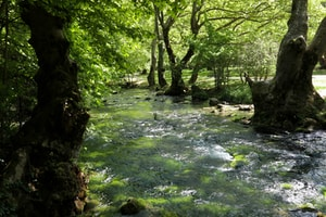 green water between brown trees during daytime