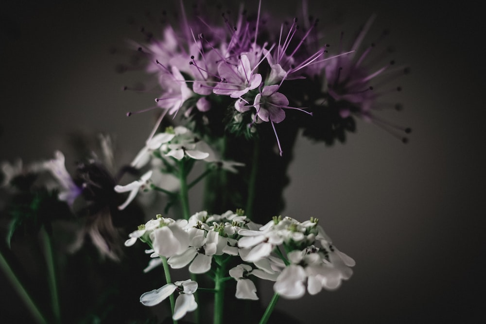 white and purple flower in close up photography