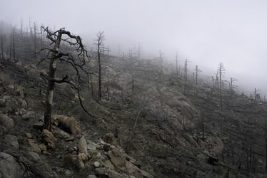 A Legacy of Tinderbox Forests