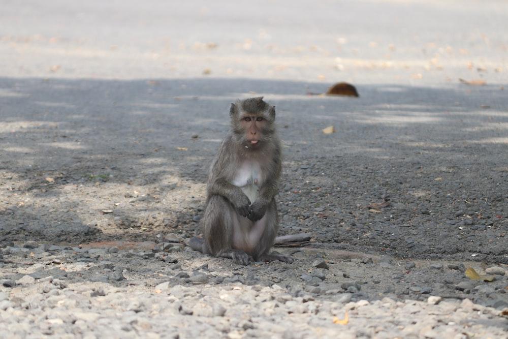 brown monkey sitting on gray sand during daytime
