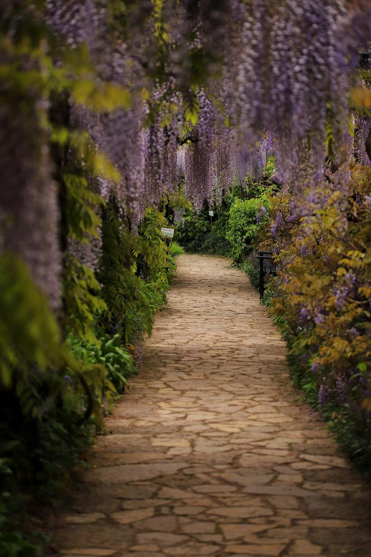 brown pathway between green plants