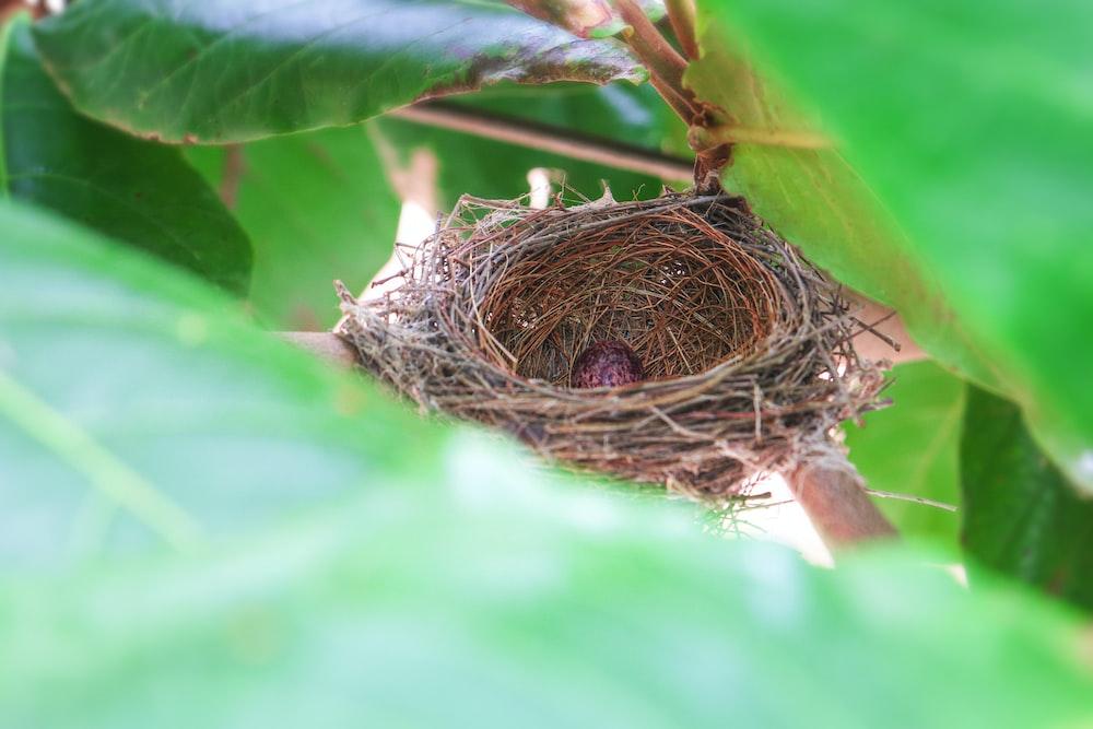 brown bird nest on green leaf