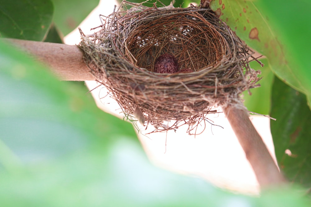 brown nest on green tree