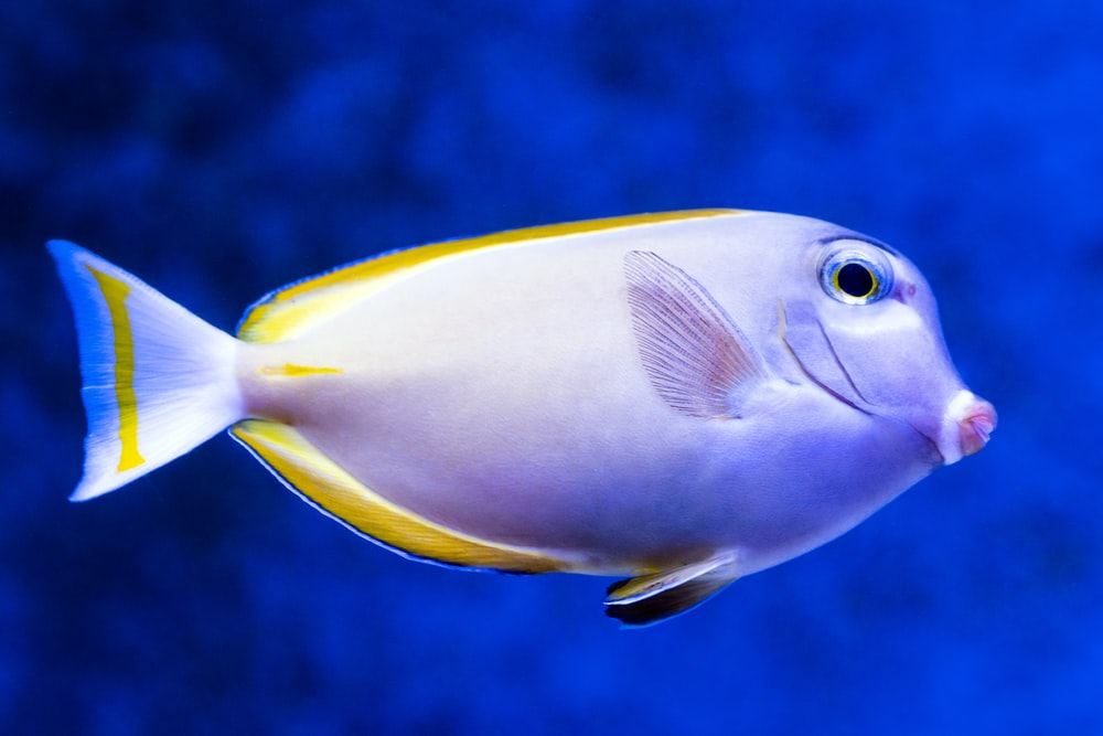 yellow and blue fish under blue sky