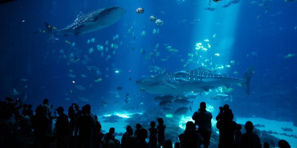 people watching fish in aquarium