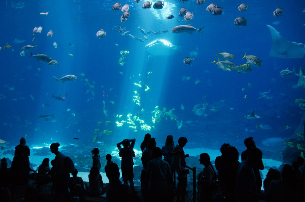 people watching a fish in a fish tank