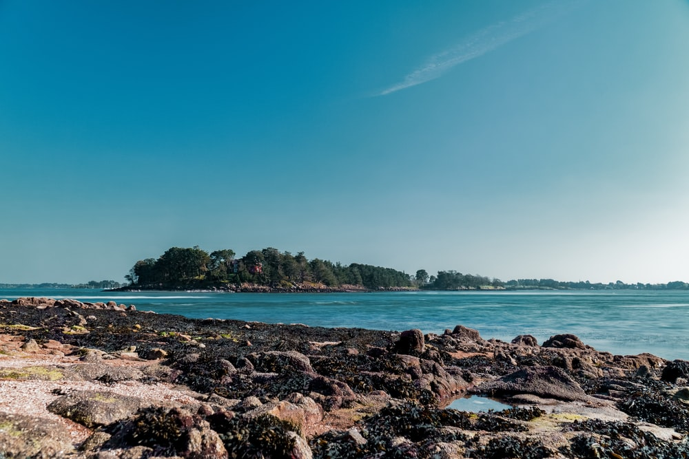 brown rocky shore near green trees under blue sky during daytime
