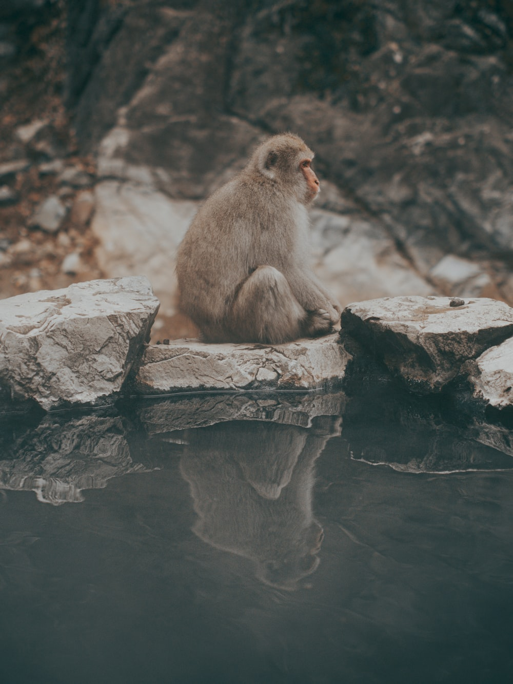 brown monkey sitting on gray rock during daytime