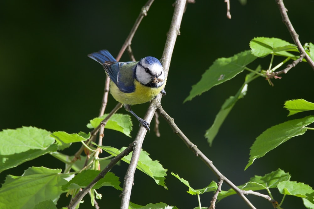 blue and yellow bird on tree branch
