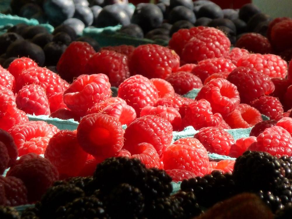 red raspberry fruits in tilt shift lens