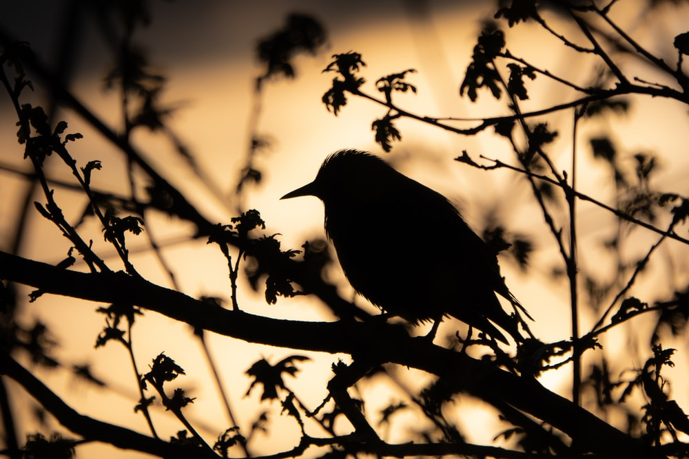 silhouette of bird on tree branch during daytime