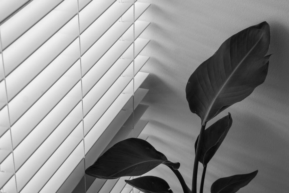 green plant beside white window blinds