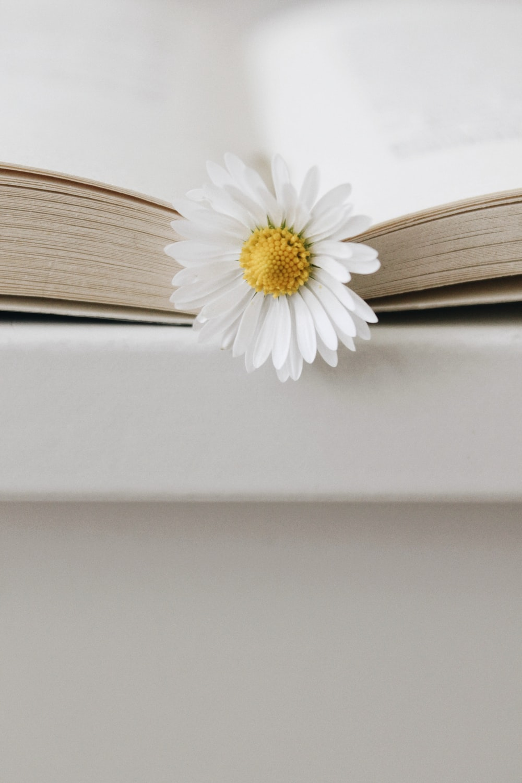 white daisy on white surface