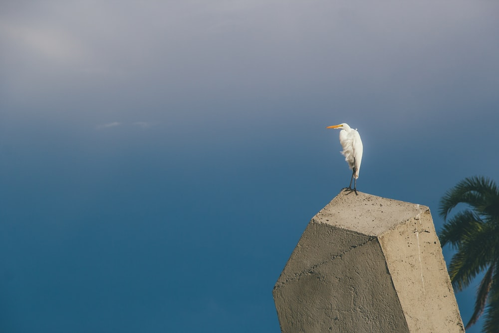white bird on gray concrete wall during daytime