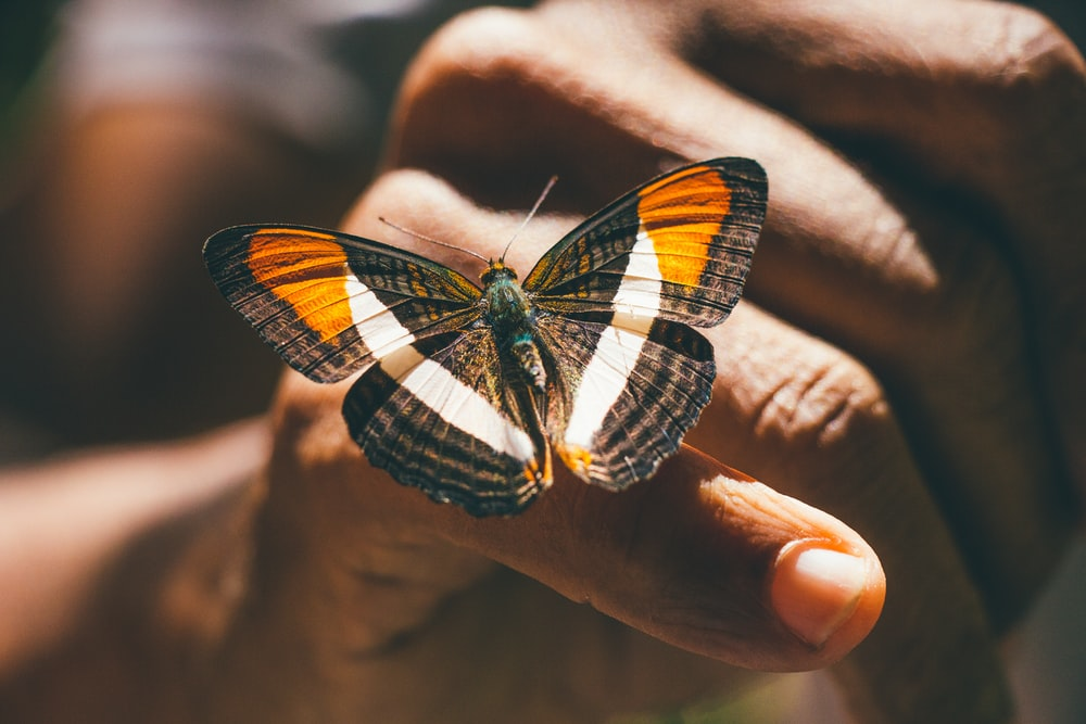 brown and black butterfly on persons hand