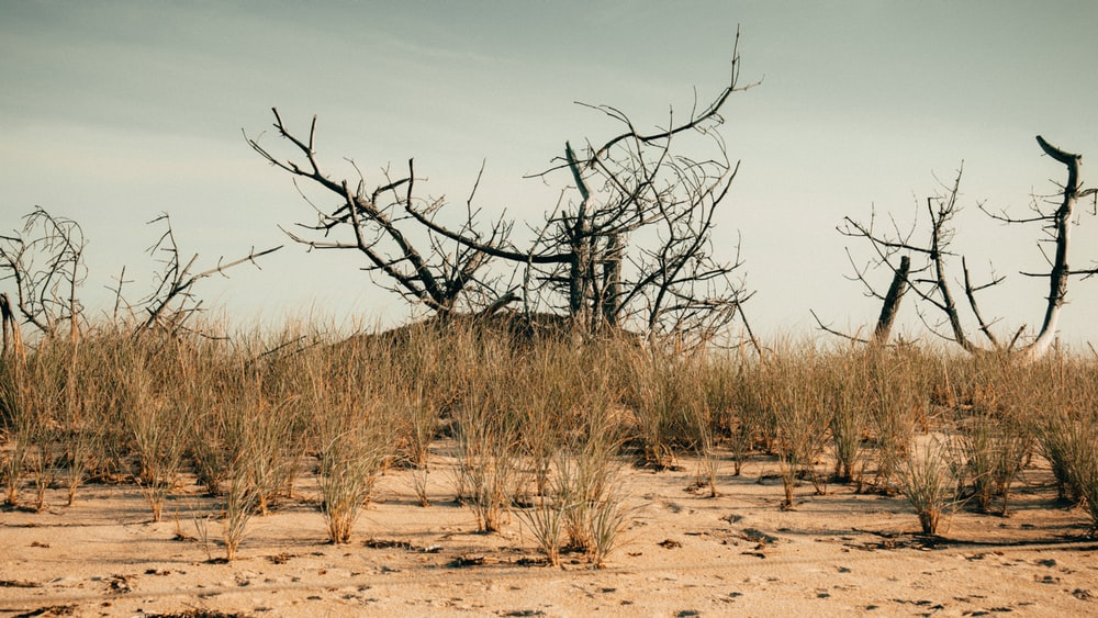 leafless tree on brown sand during daytime