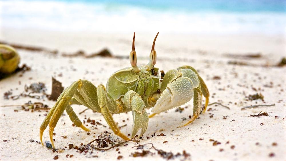 Gray Crab On White Sand During Daytime