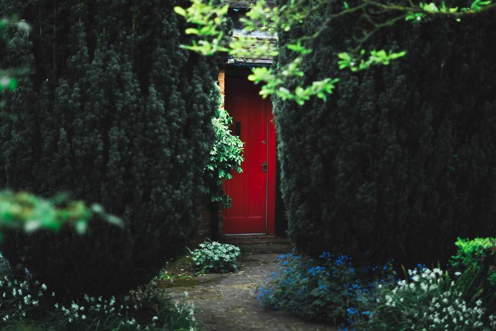 red wooden door near green trees