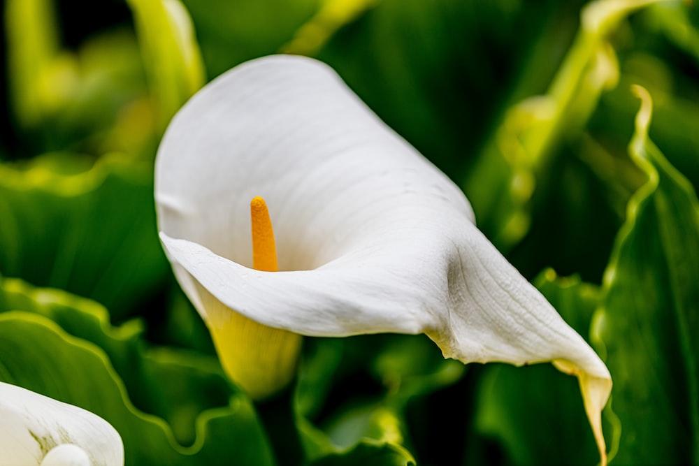 white flower in macro lens photography
