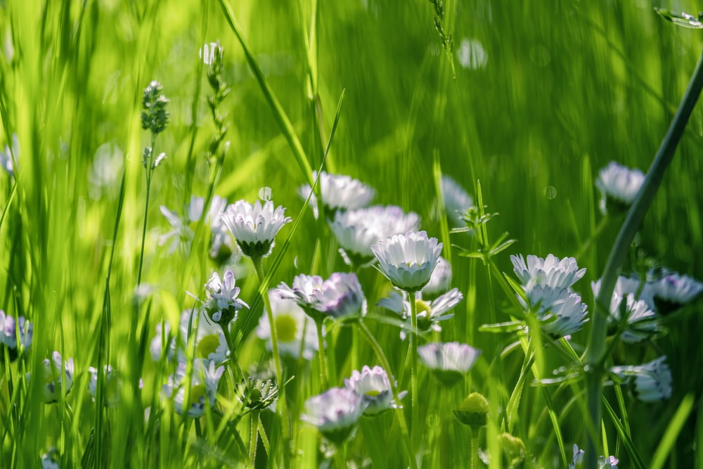 purple flowers on green grass field during daytime
