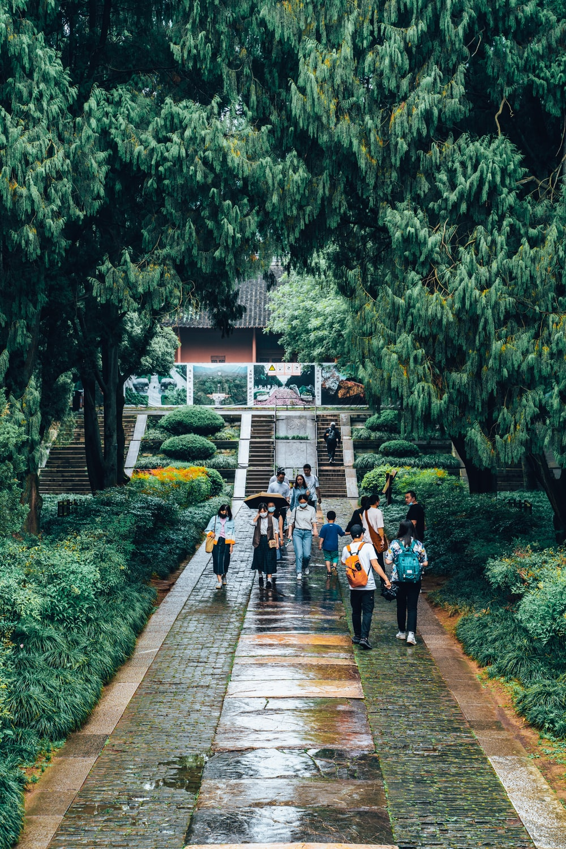 people walking on wooden pathway during daytime
