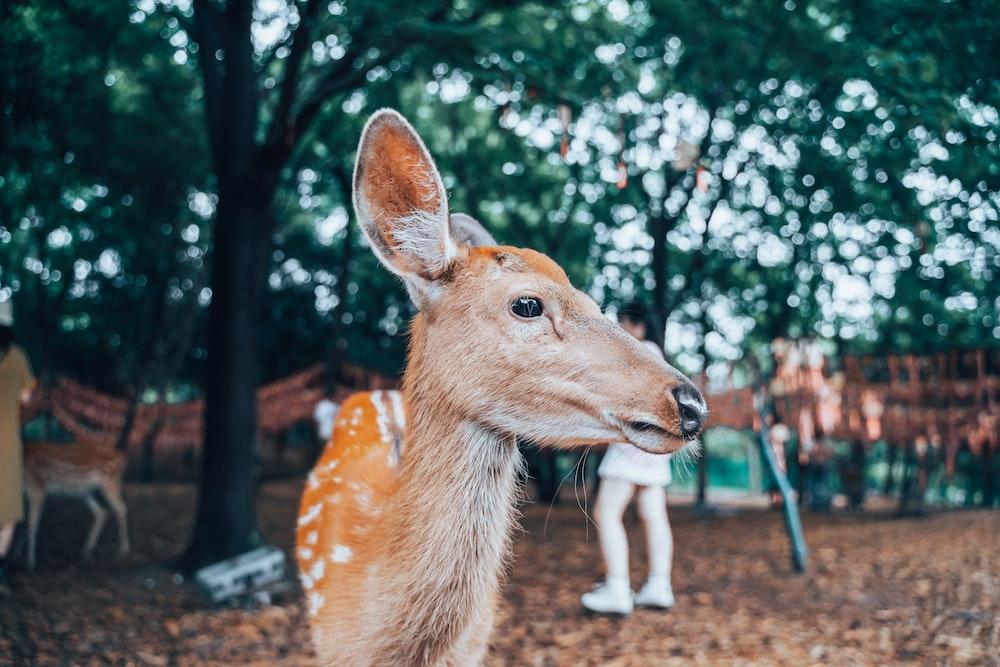 brown deer standing near green trees during daytime
