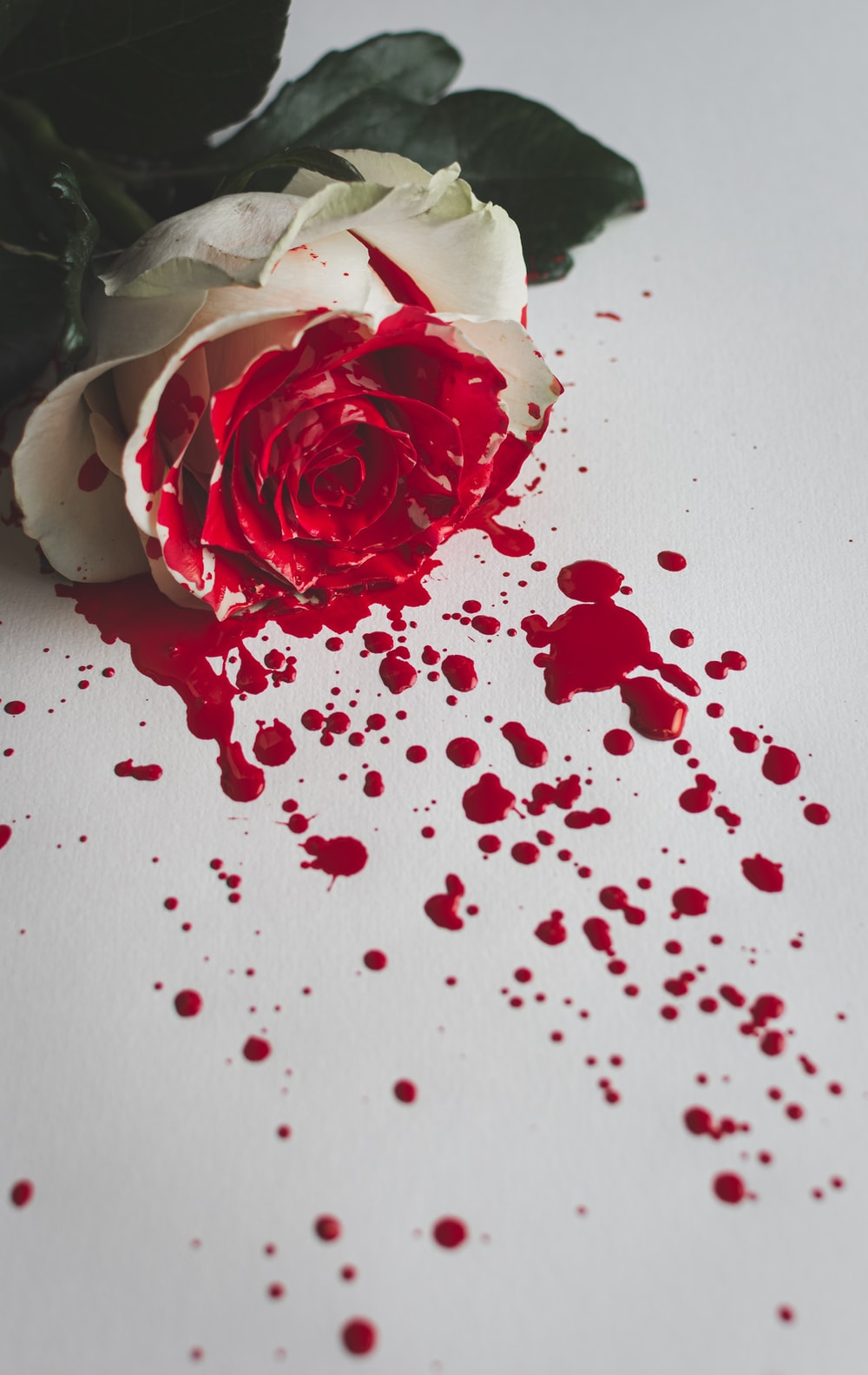 red and white rose petals on white table