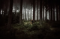 man in black shirt riding bicycle in forest during daytime
