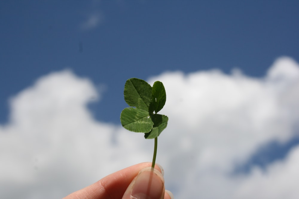 person holding green leaf during daytime