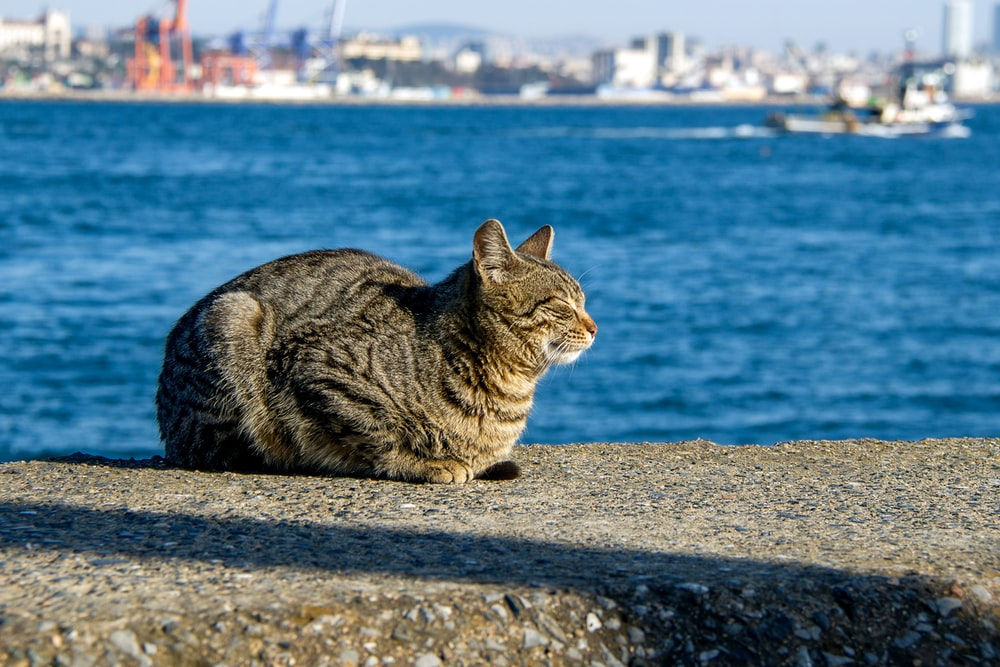 brown tabby cat sitting on gray concrete surface near body of water during daytime