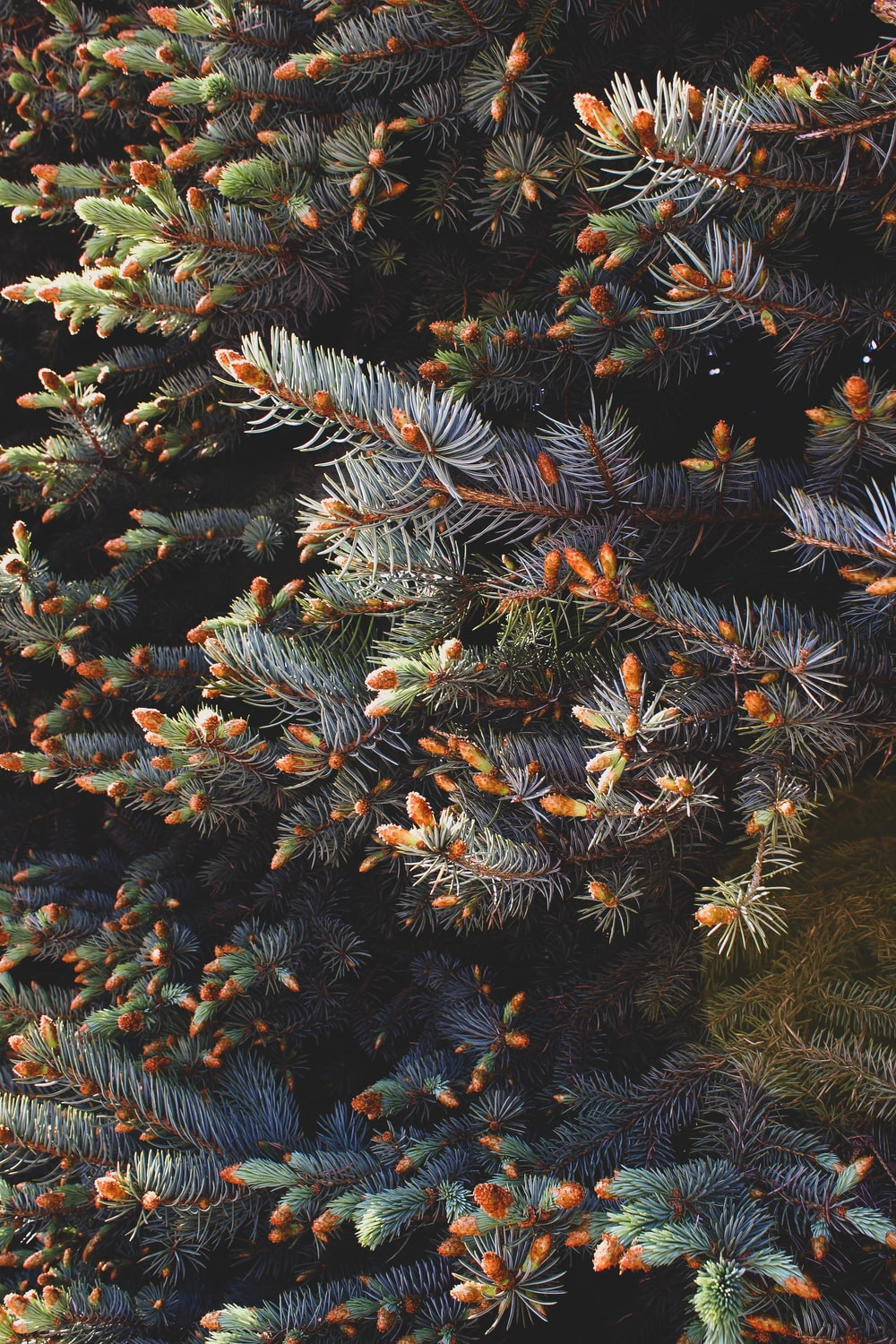 green and brown pine tree